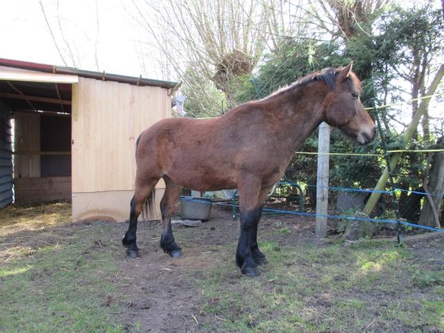 LEON - ONC poney né en 2000 - adopté en mars 2014 par Bilby - Page 2 Img_0210