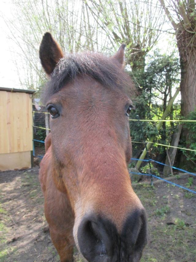 LEON - ONC poney né en 2000 - adopté en mars 2014 par Bilby - Page 2 Img_0217