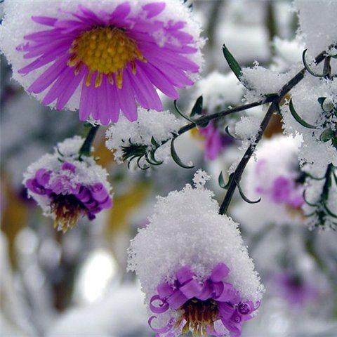 Первый Снег 0c343810