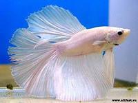 Рыбки. 110