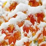 Первый Снег 1210
