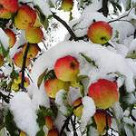 Первый Снег 2010