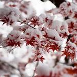 Первый Снег 910
