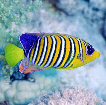 Рыбки. F2486d10