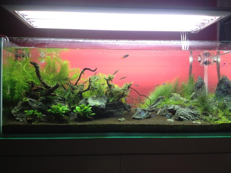 Algues filamenteuses, corne de cerf   Img_0510