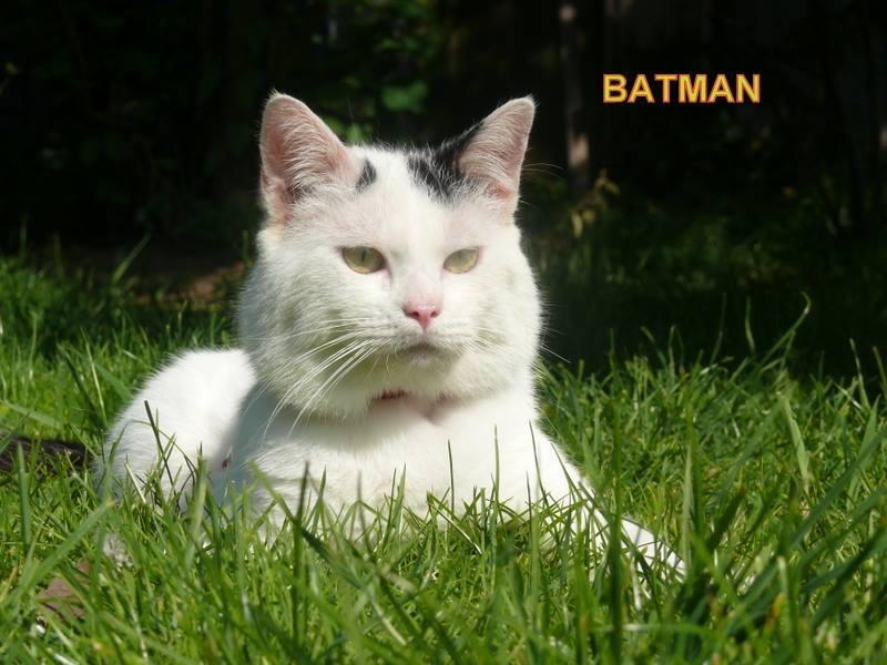 Batman -  blanc et noir né en 2013 10396510