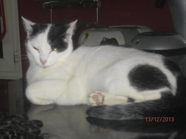Violette - blanche et noire née en 2012 14748210