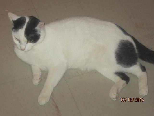Violette - blanche et noire née en 2012 14812410