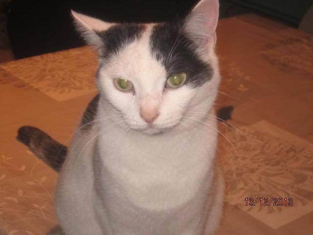 Violette - blanche et noire née en 2012 14822110