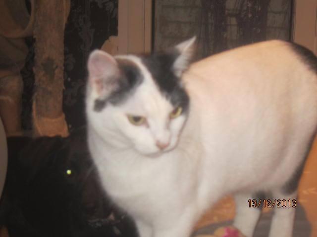 Violette - blanche et noire née en 2012 14836810
