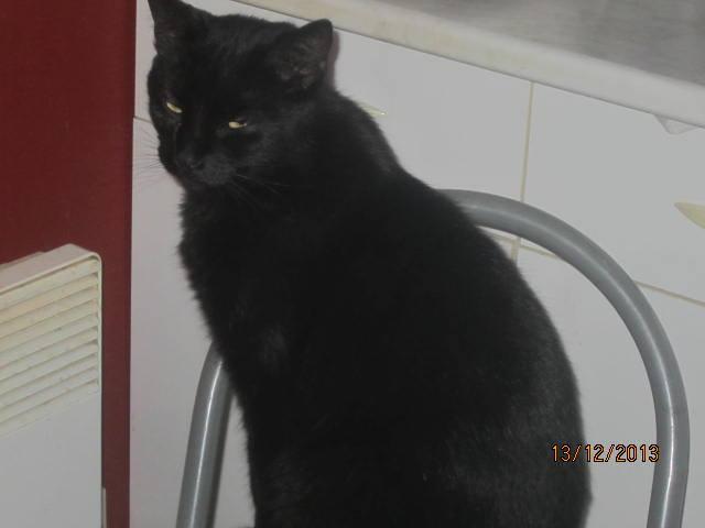 Shadow - noir yeux ors né en 2011 Bjk10