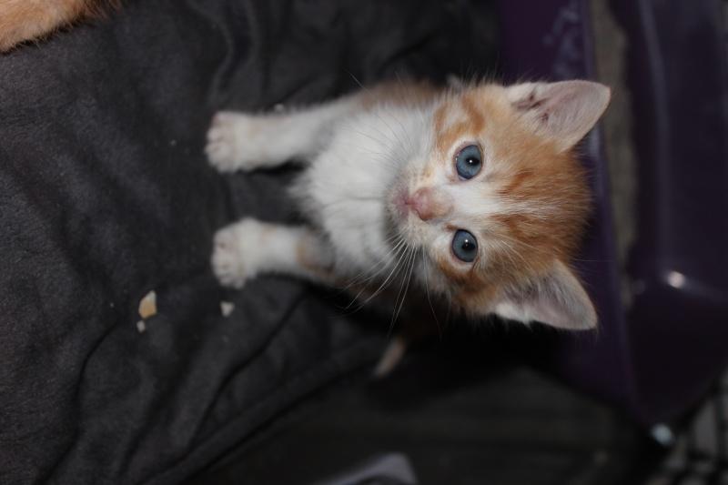 Joy - Petite Louloute rousse et blanche Adoptée Img_4016