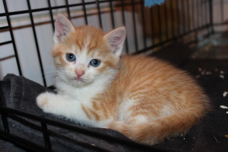 Joy - Petite Louloute rousse et blanche Adoptée Img_4017