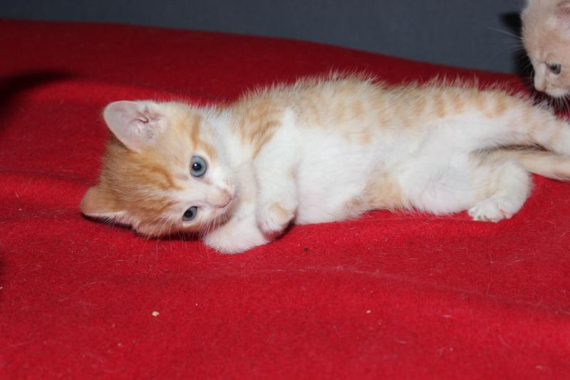 Joy - Petite Louloute rousse et blanche Adoptée Img_4212
