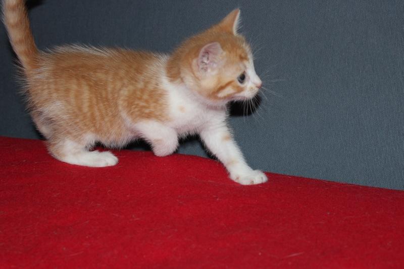 Joy - Petite Louloute rousse et blanche Adoptée Img_4213