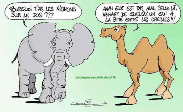 Les blagues en images Elepha10