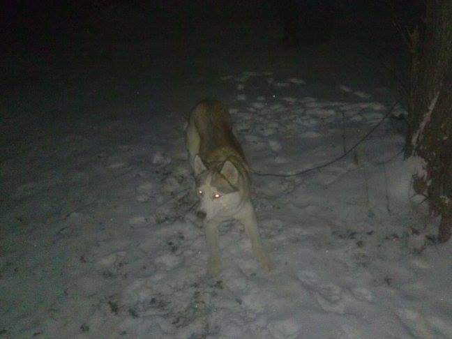 Kilo's first snow!!! Kiloni10