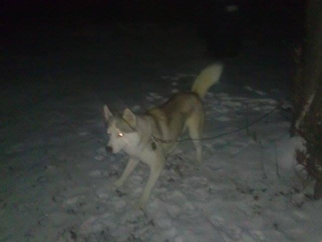 Kilo's first snow!!! Kiloni11