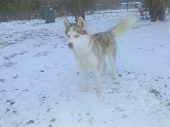 Kilo's first snow!!! Kilosn10