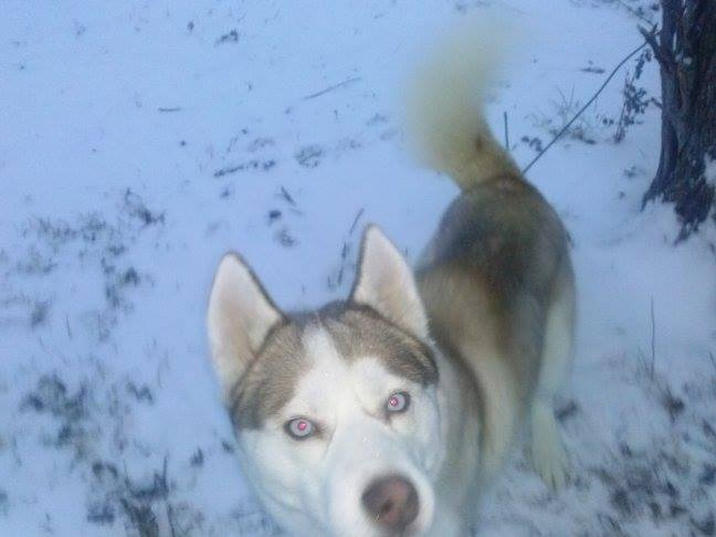 Kilo's first snow!!! Kilosn11