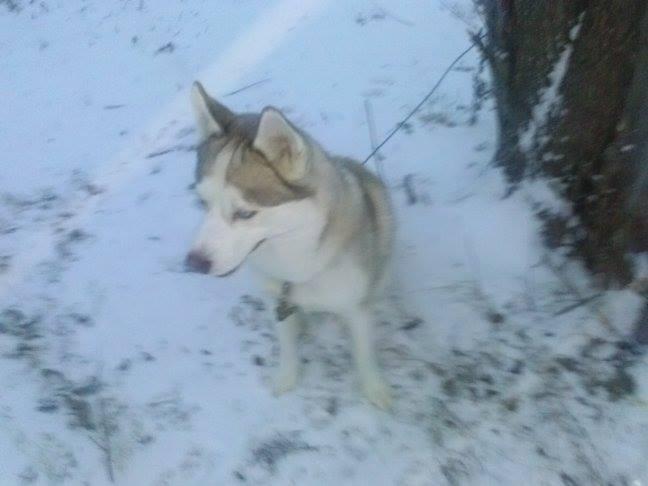 Kilo's first snow!!! Kilosn12