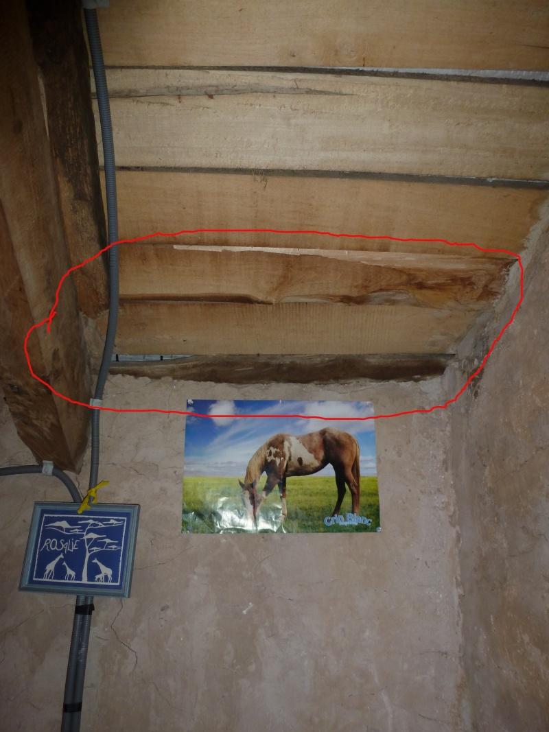 Nid de guêpes sous toiture / accès intérieur Nid-in11