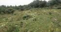 Iris lutescens Fabrag11