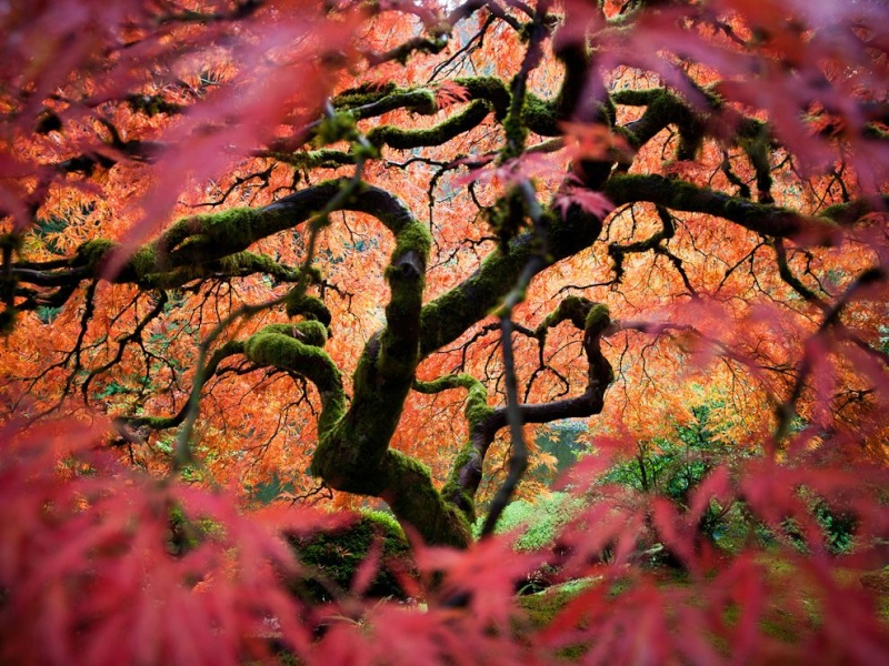 The Fairy Tale Bonsai Style Japane13