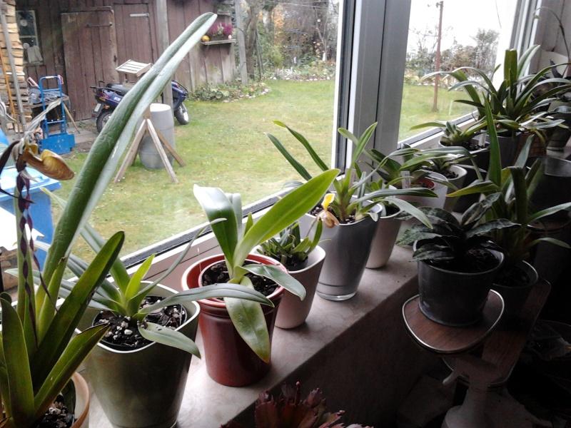 Meine 50. Orchidee! 2013-111