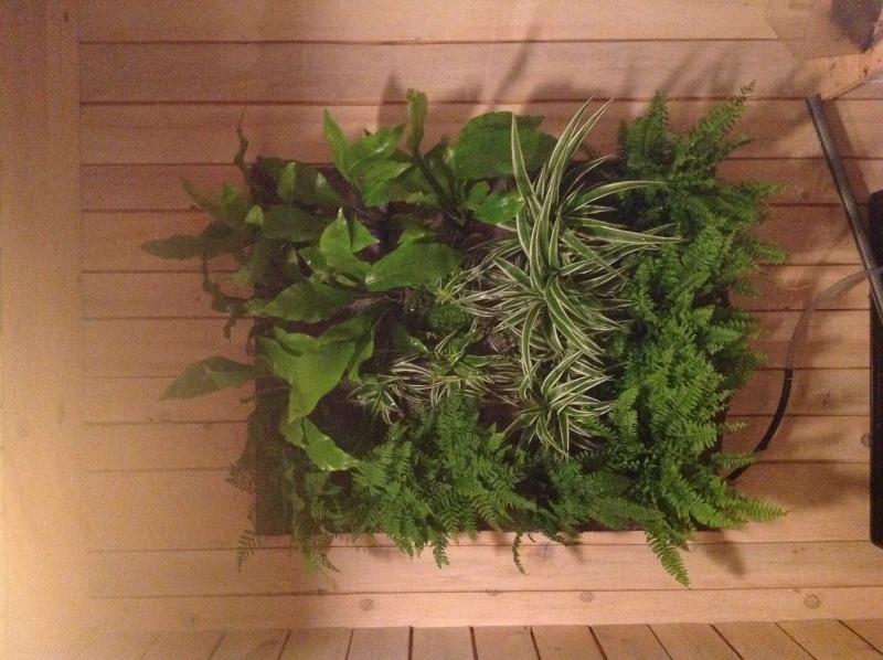 Problème mur vegetal Image18