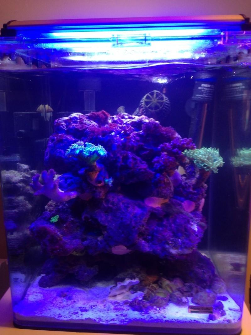 Nano 30 litres récif de bru33 - Page 2 Img_1422