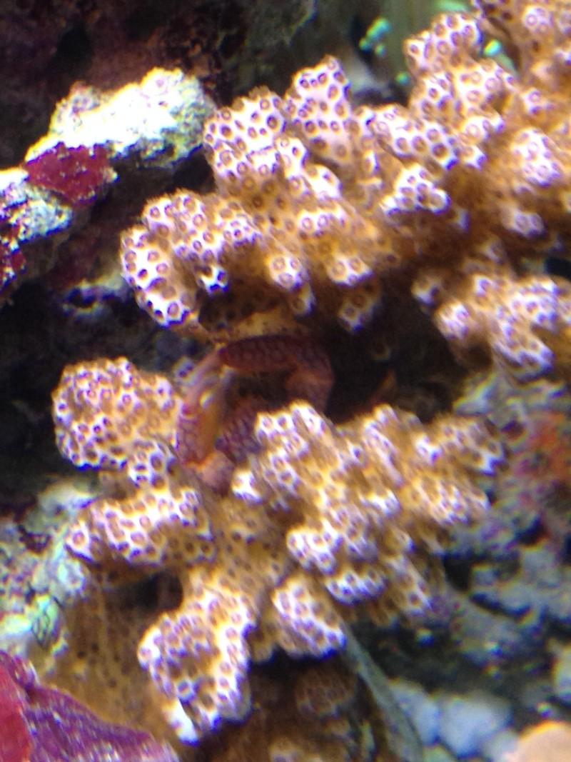 Nano 30 litres récif de bru33 - Page 2 Img_1425