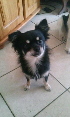 Mes nounours !! ( chiens et chats ^^ ) Cam09010