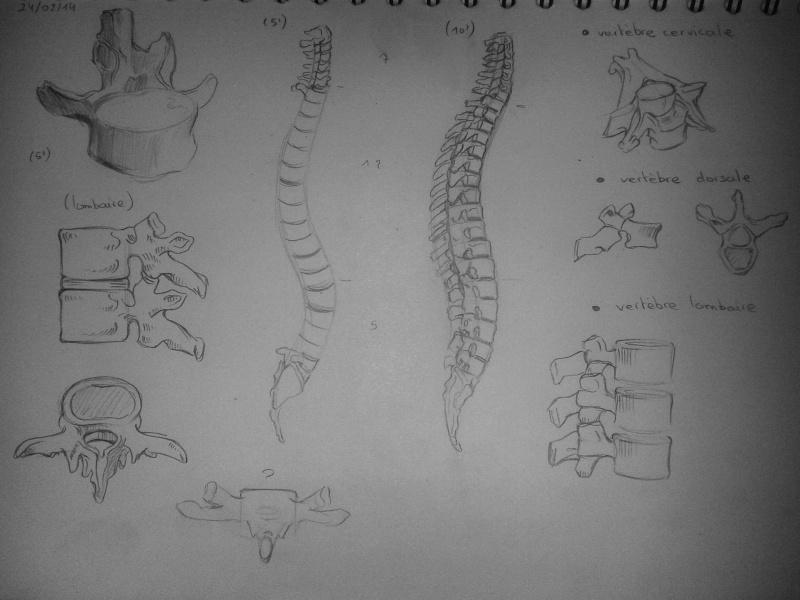 [defis] Lundi Anatomie 20140217