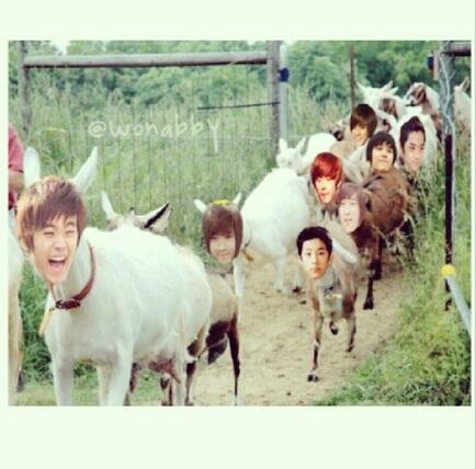 [GAME] Top Ten Reasons 'kung bakit 'di ka crush ng bias mo' Goat11