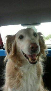 Mon chien Titoune <3 13853711