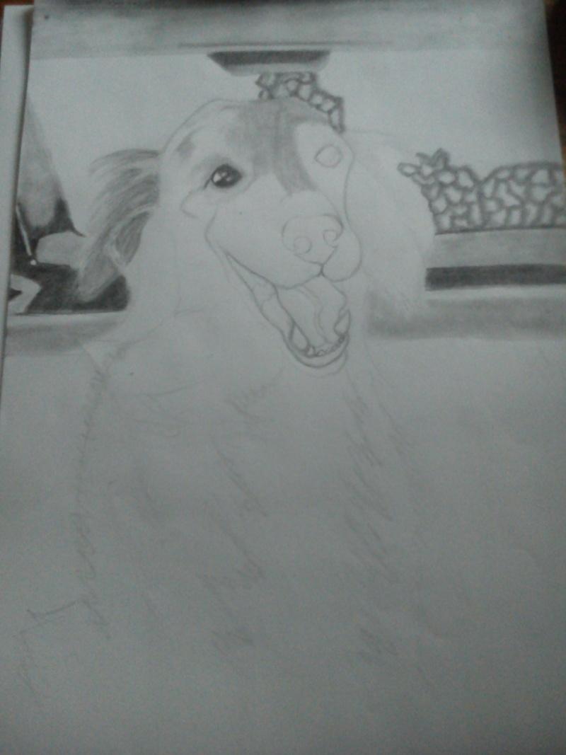 Mon chien Titoune <3 Dsc_0113