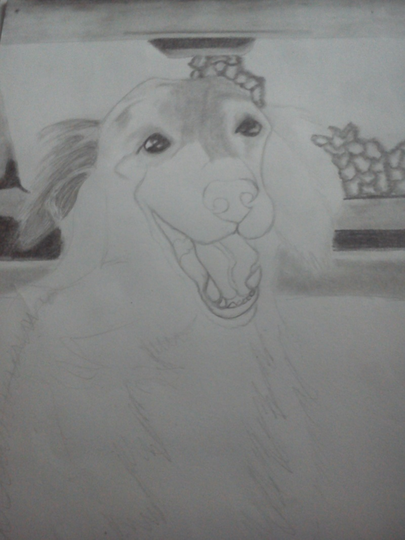 Mon chien Titoune <3 Dsc_0114