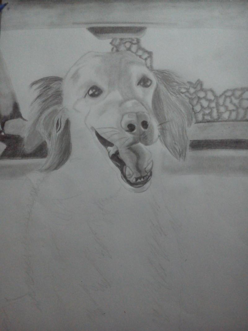 Mon chien Titoune <3 Pi11