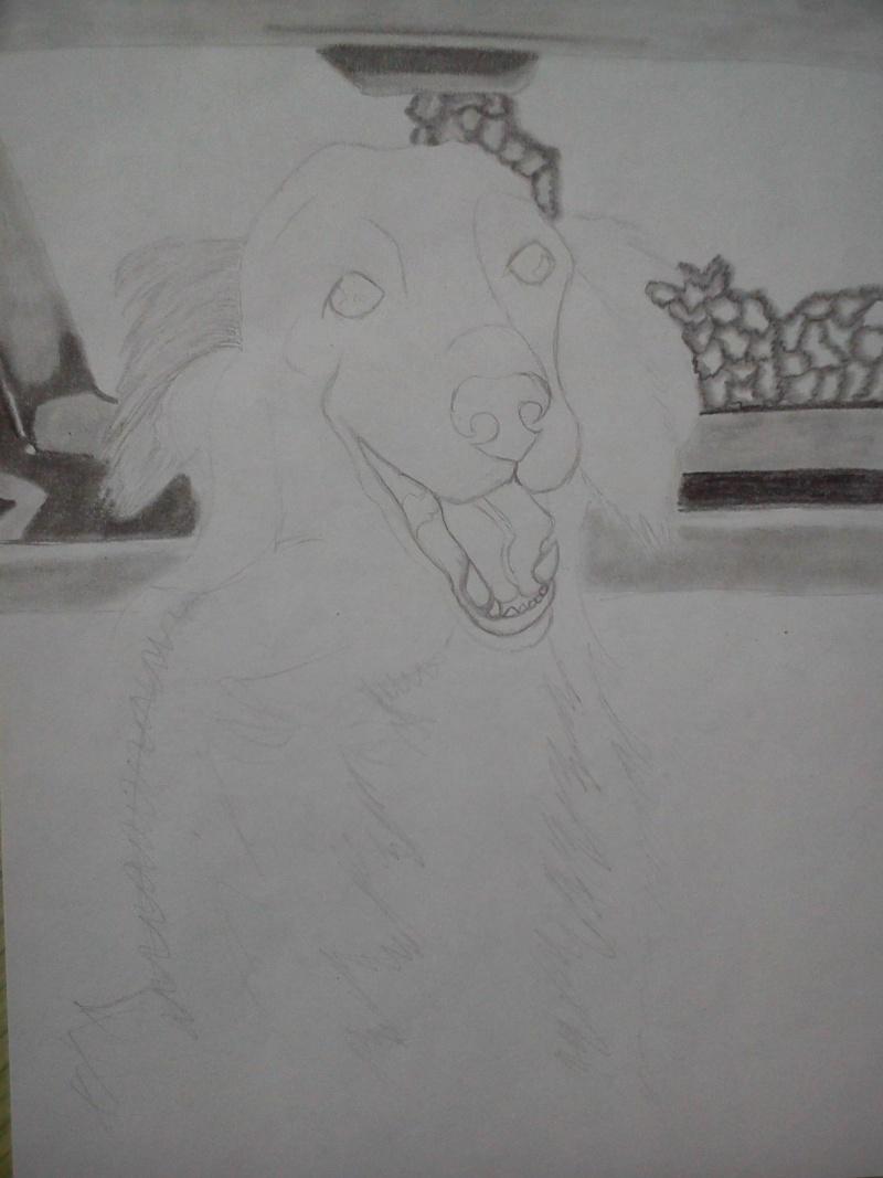 Mon chien Titoune <3 Ti11