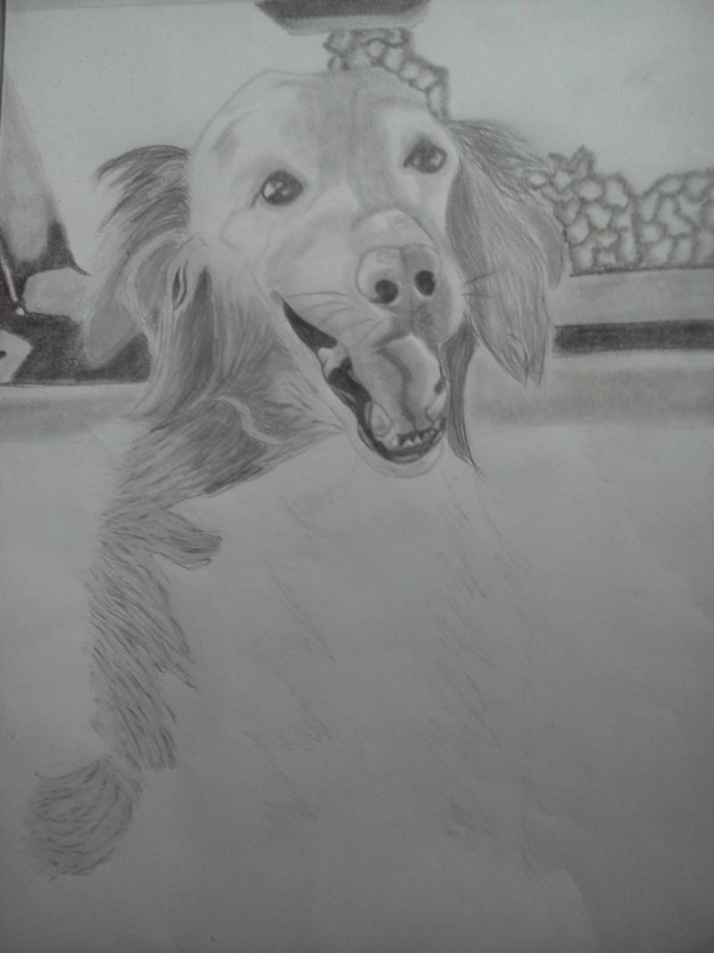 Mon chien Titoune <3 Ti111
