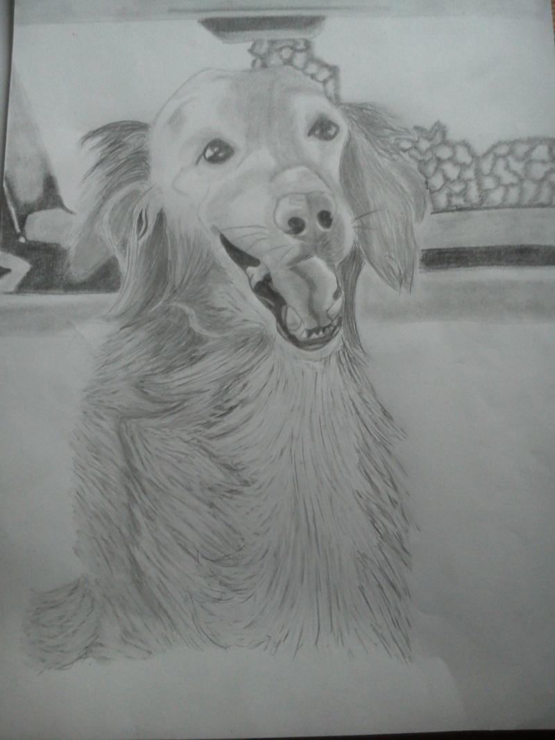 Mon chien Titoune <3 Ti310