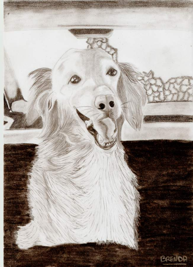 Mon chien Titoune dessin final !  Titoun10