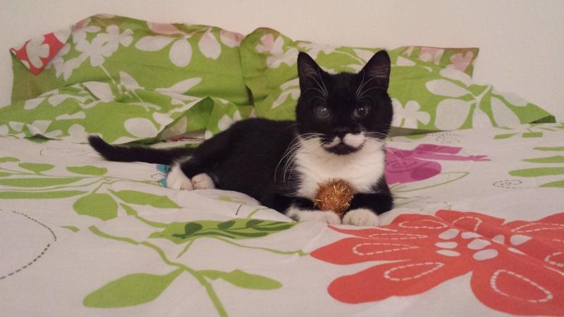 Jipsy, femelle, 2012, noire et blanche Jipsy11