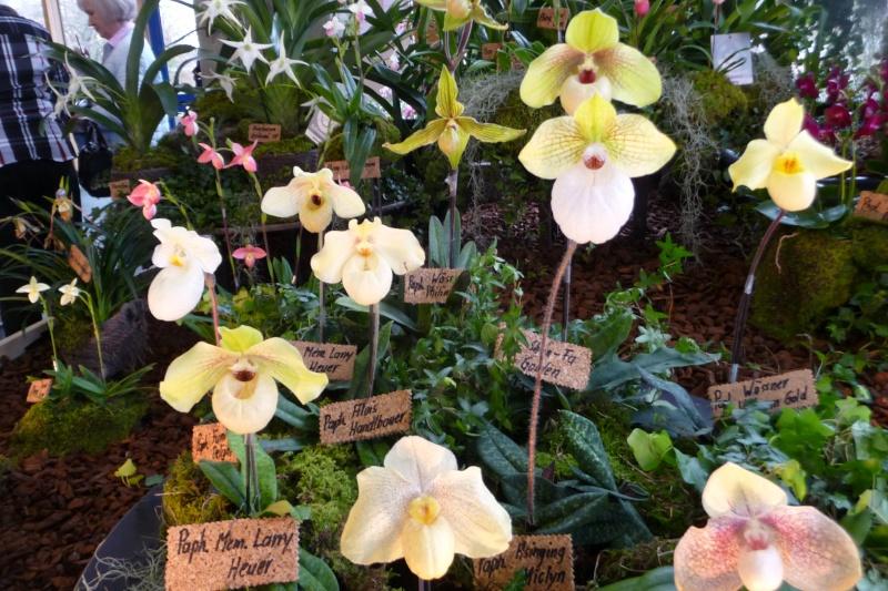 Neu-Ulmer Orchideentage 07.02.-09.02.2014   P1240611