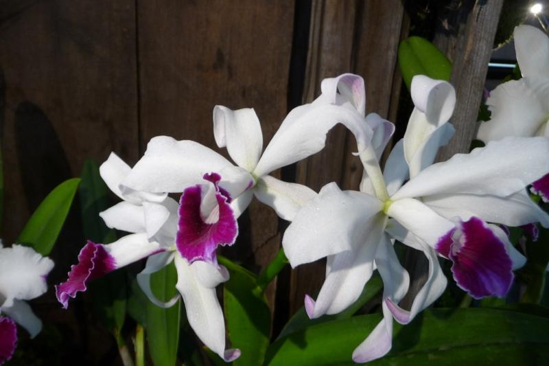 Neu-Ulmer Orchideentage 07.02.-09.02.2014   P1240612