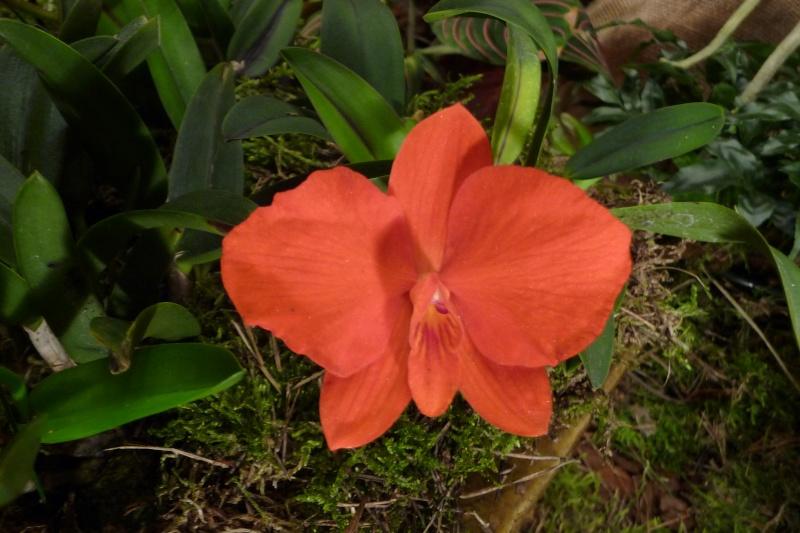 Neu-Ulmer Orchideentage 07.02.-09.02.2014   P1240614