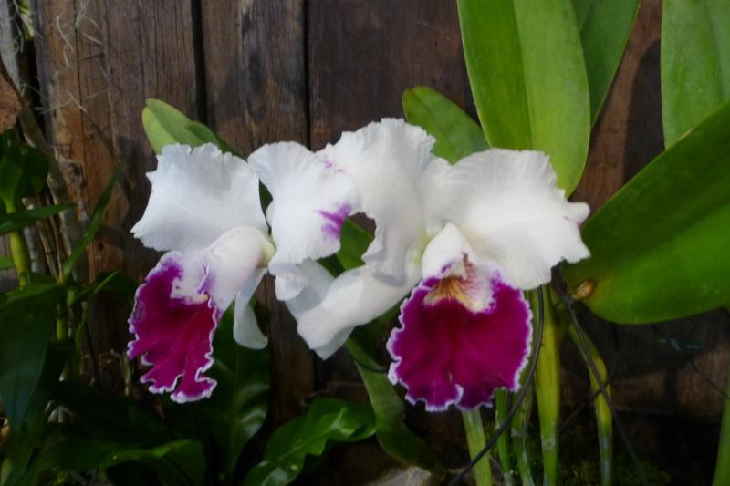 Neu-Ulmer Orchideentage 07.02.-09.02.2014   P1240616