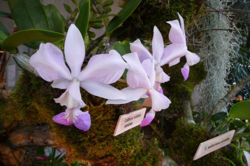 Neu-Ulmer Orchideentage 07.02.-09.02.2014   P1240620