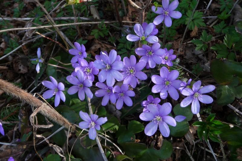 Blütenzauber am Lech P1250423